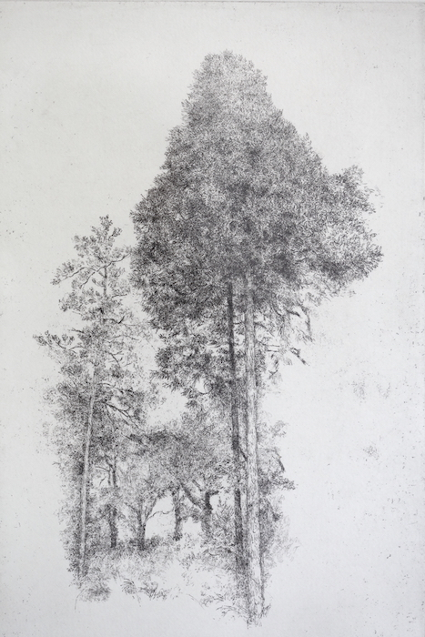 http://gallery-su.jp/exhibitions/%E5%8C%97%E4%B8%AD%E5%B1%952018%E2%88%922.JPG